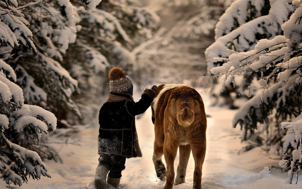 Фото обои деревья, природа, ребенок, снег, зима, собака