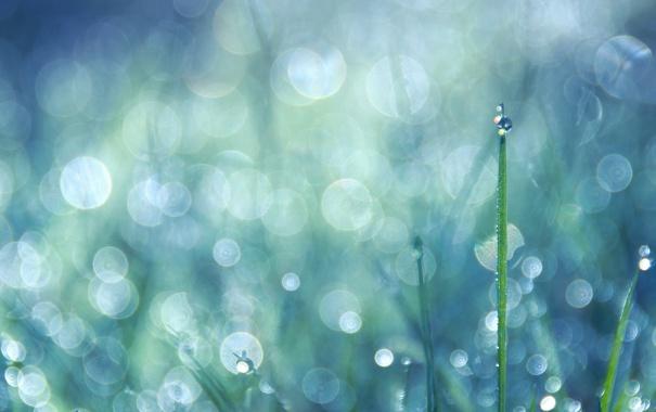 Фото обои трава, капли, bokeh