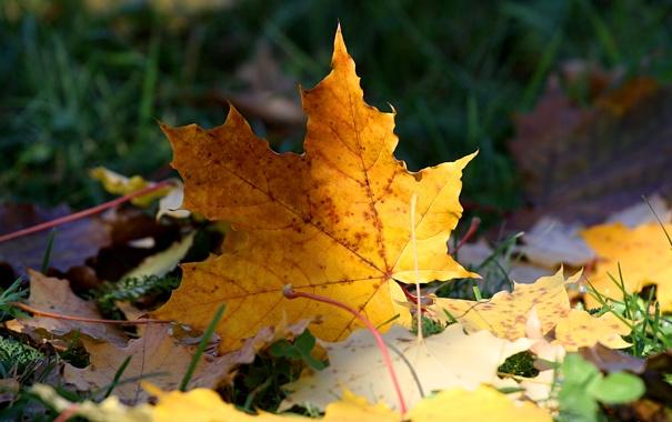 Фото обои осень, трава, лист