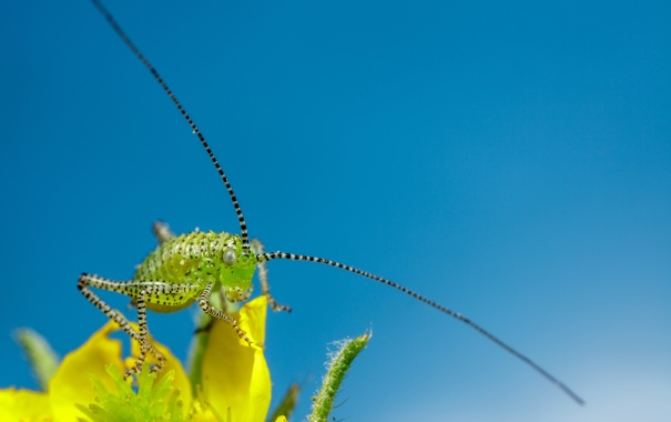 Фото обои цветок, небо, лепестки, насекомое, боке