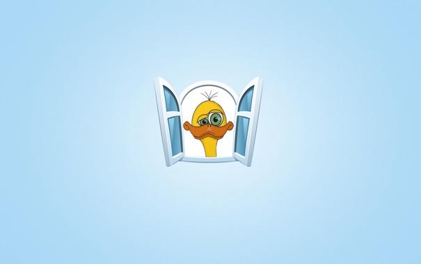 Фото обои морда, желтый, птица, окно, страус, птенец, синий фон