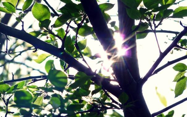 Фото обои зелень, лето, свет, ветки, дерево