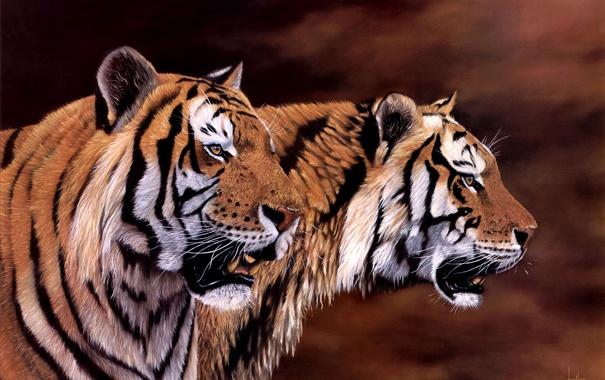 Фото обои арт, тигры, Jonathan Truss