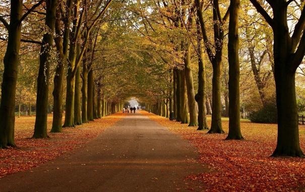 Фото обои дорога, осень, листья, деревья, прохожие