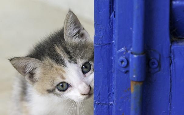 Фото обои глаза, взгляд, котенок, мордочка