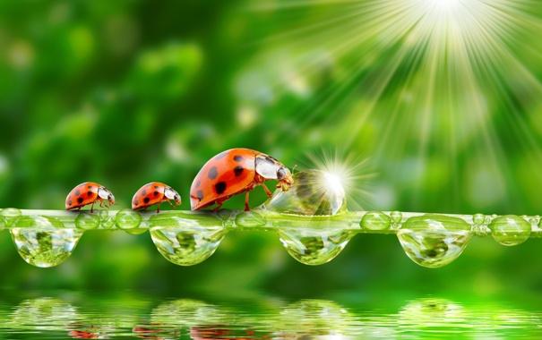 Фото обои зелень, вода, капли, природа, лучи солнца, nature, water
