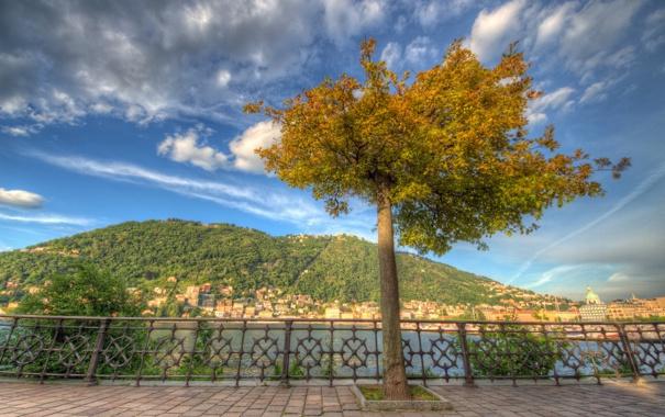 Фото обои дерево, Италия, набережная, Italy, озеро Комо, Ломбардия, Комо