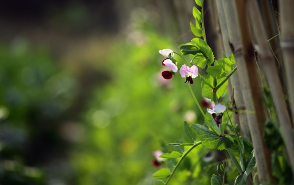 Фото обои цветы, природа, забор
