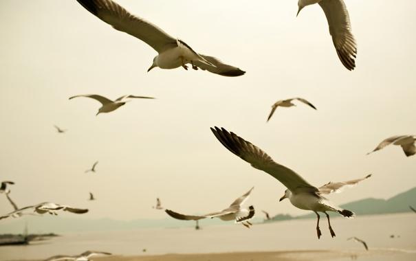 Фото обои животные, пейзаж, птицы, фото, обои, полёт