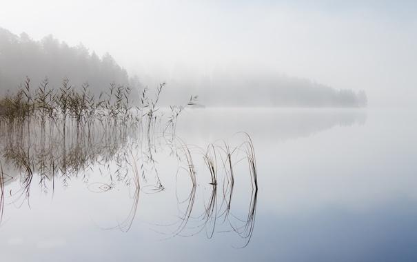 Фото обои природа, туман, озеро, утро