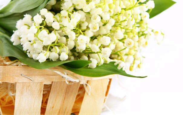Фото обои цветы, корзинка, ландыши, flowers, basket, lilies