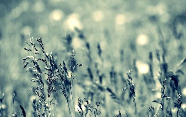 Фото обои трава, поляна, цвет, колоски, обои, природа, фон