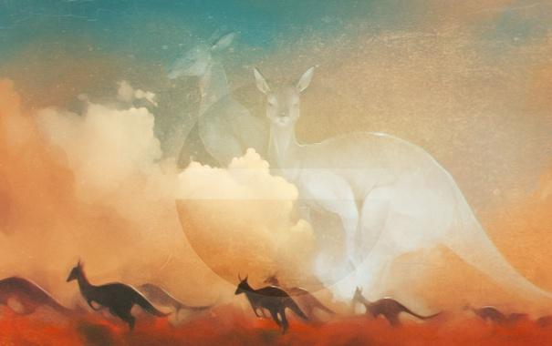 Фото обои солнце, кенгуру, art, kangaroo
