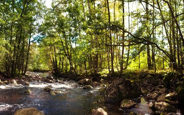 Фото обои зелень, лес, деревья, река, камни, поток