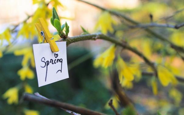 Фото обои природа, дерево, записка, spring