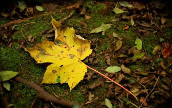 Фото обои осень, лес, листья, макро, природа, парк, земля