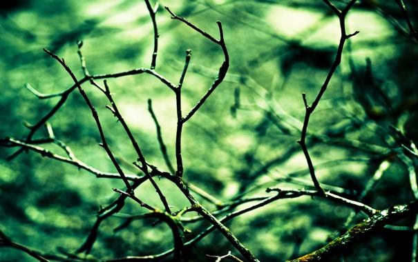 Фото обои макро, ветки, природа, фон, дерево, обои, растения