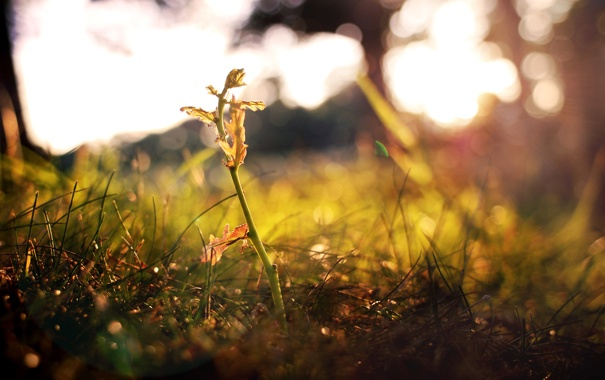 Фото обои осень, росток, Трава