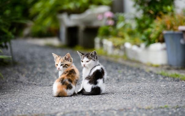 Фото обои дорога, котята, друзья