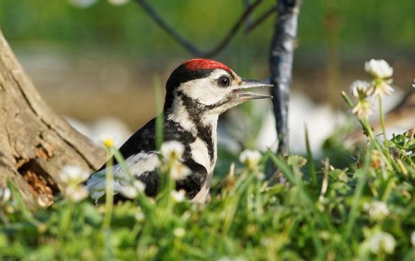 Фото обои лето, природа, птица