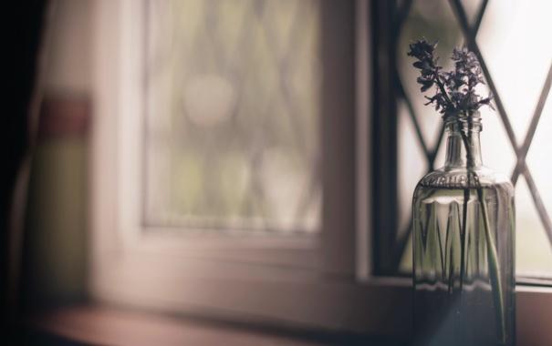 Фото обои цветы, окно, банка