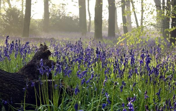 Фото обои природа, лес, цветы