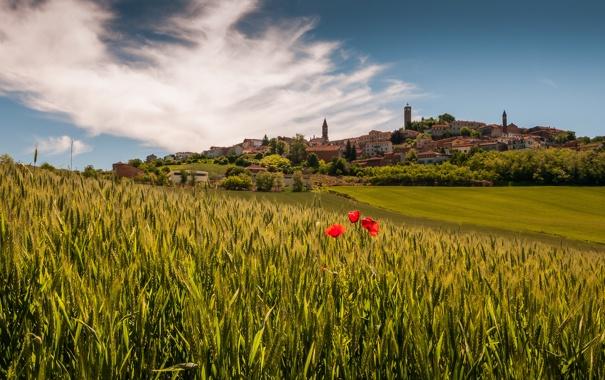 Фото обои поля, маки, деревня, Италия, Italy, Piedmont
