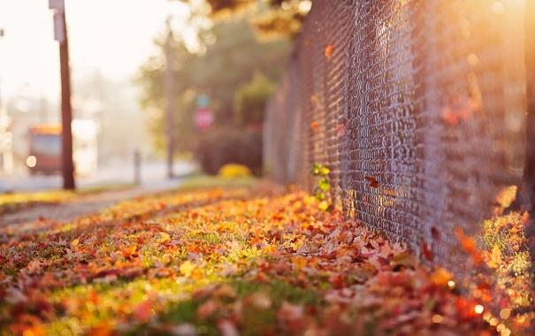 Фото обои осень, улица, забор