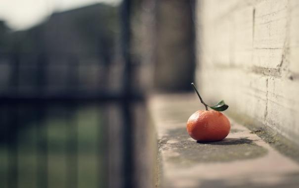 Фото обои фон, фрукт, мандарин