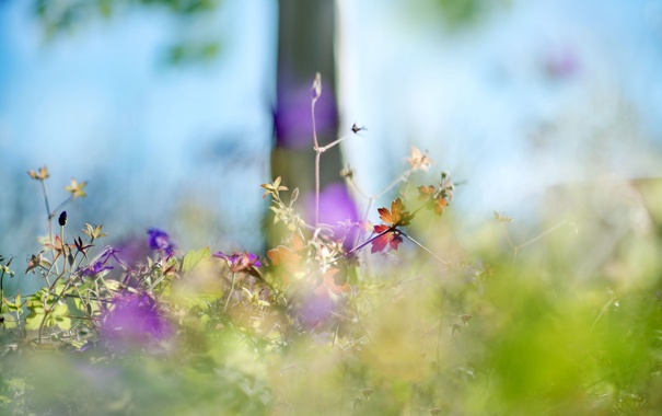 Фото обои трава, цветы, дерево, растение, дымка