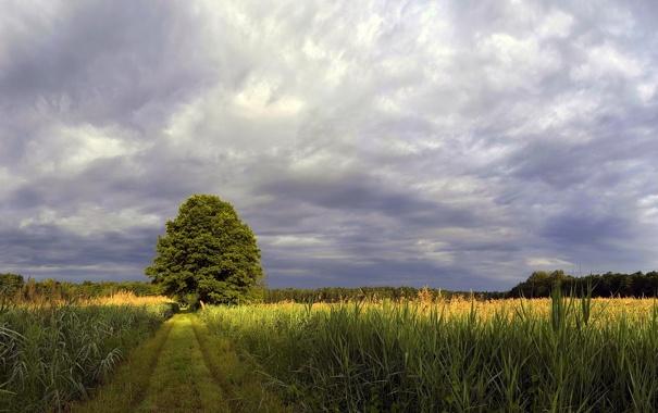Фото обои поле, лес, дерево, тропа, даль, горизонт