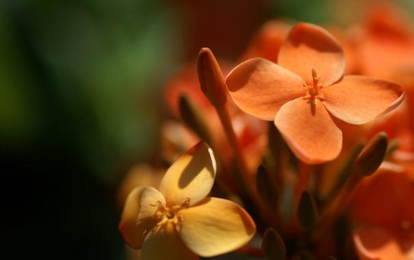 Фото обои макро, цветы, природа, фото, лепестки
