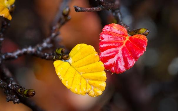 Фото обои осень, листья, вода, краски, ветка