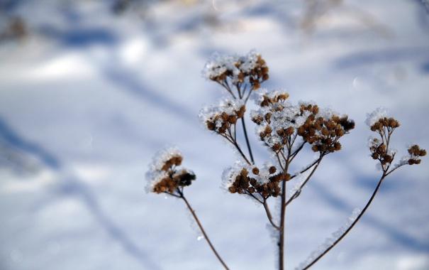 Фото обои зима, белый, трава, снег