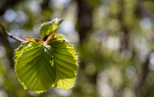 Фото обои листья, макро, свет