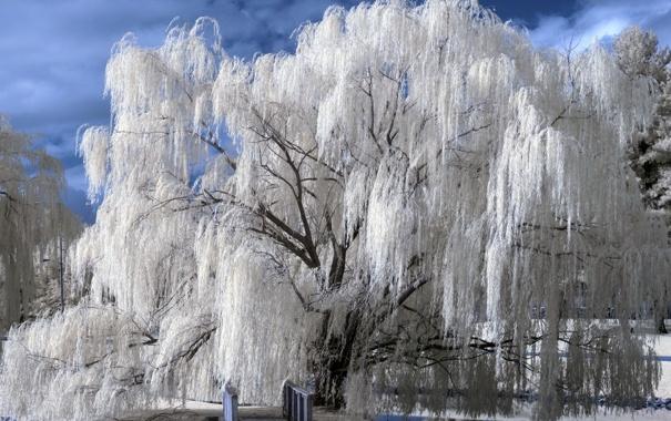 Фото обои белый, небо, синий, мост, дерево, Парк