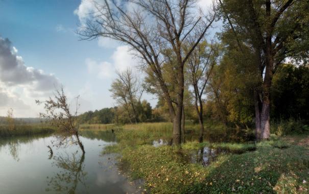 Фото обои деревья, лес, пруд, осень