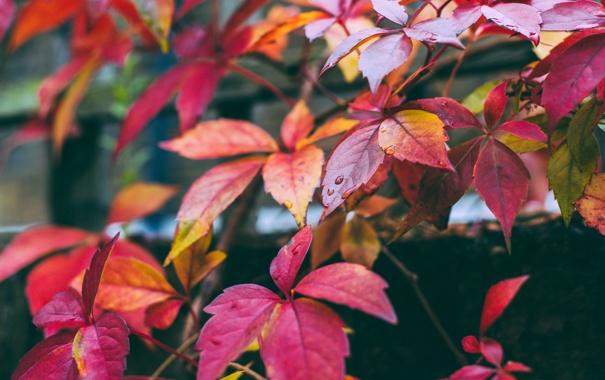 Фото обои осень, листья, краски, цвет, ветка