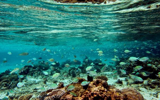 Фото обои рыбы, отпуск, Мальдивы, Maldives, хочу обратно