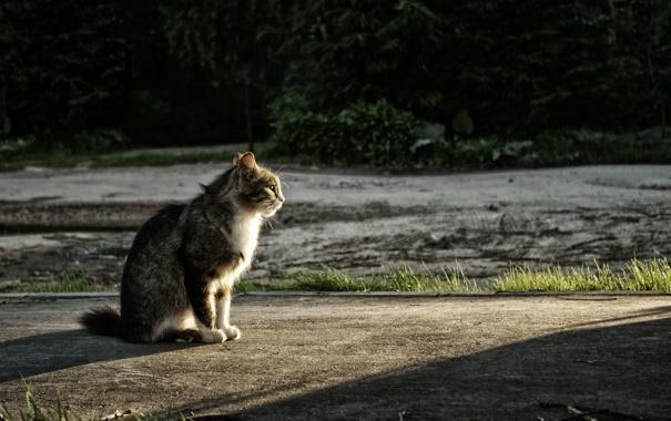 Фото обои закат, кот, сидит, Паша Иванов, photographer, глядит