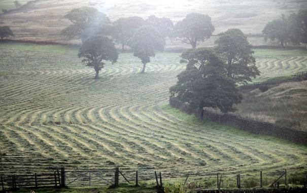 Фото обои природа, пейзаж, поле, туман