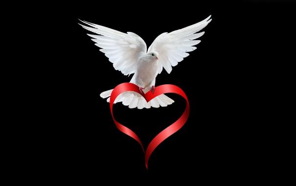 Фото обои птица, сердце, голубь, лента