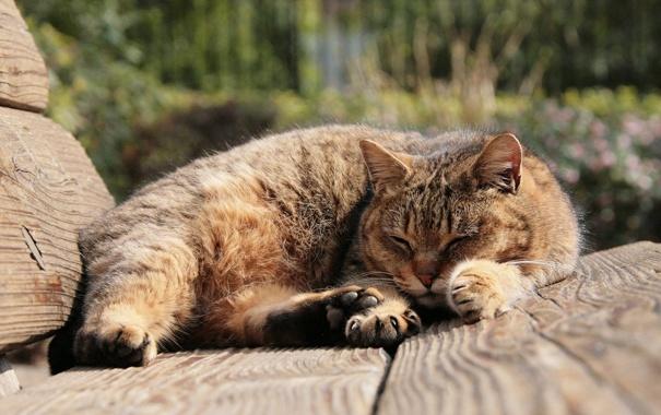 Фото обои коричневый, кот, лавочка, улича, сон