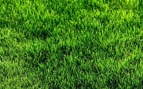 Фото обои трава, газон, зелёный