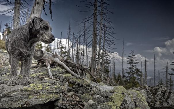 Фото обои природа, фон, собака