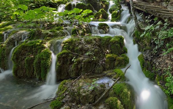 Фото обои лес, растительность, речка, каскад