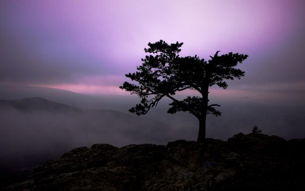 Фото обои небо, свет, пейзаж, горы, природа, туман, дерево