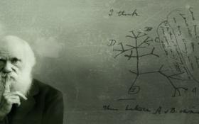 Обои надписи, ученый, схемы, Чарльз Дарвин, Charles Darwin, теория эволюции