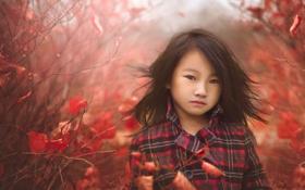 Обои осень, природа, девочка