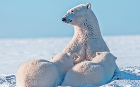 Картинка природа, семья, медведи